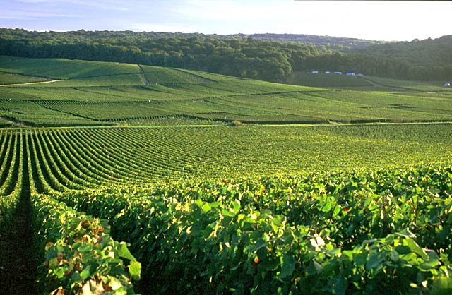 vallée-de-la-marne1